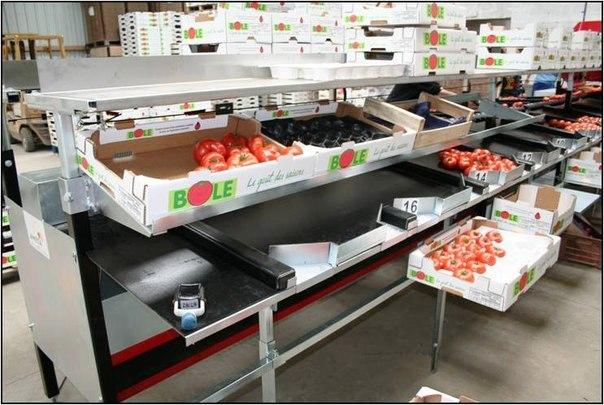 на сортировке овощей или фруктов