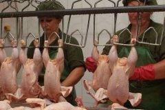 куриный завод